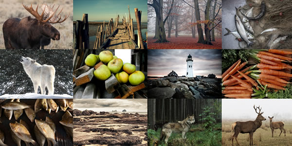 25 Beautiful WordPress Photography Themes