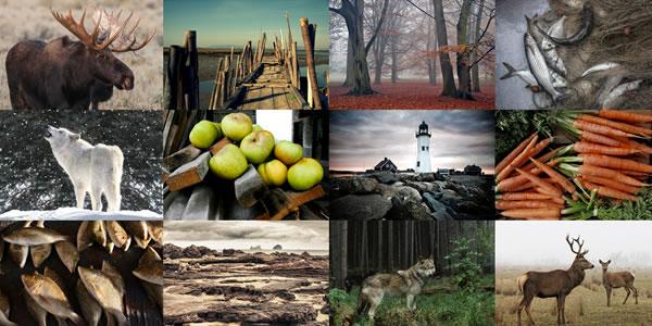 25 Beautiful WordPress Photography Themes