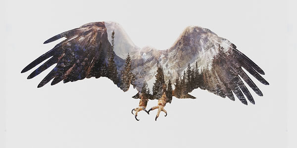 double-exposure-artic-eagle
