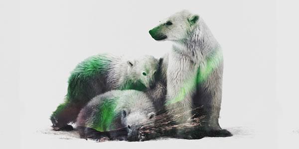 double-exposure-artic-polar-bears
