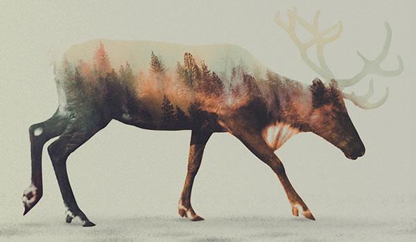 double-exposure-deer-2