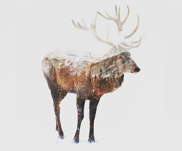 double-exposure-deer