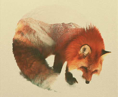 double-exposure-fox-2