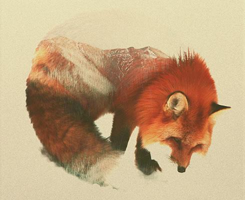 double-exposure-fox-2