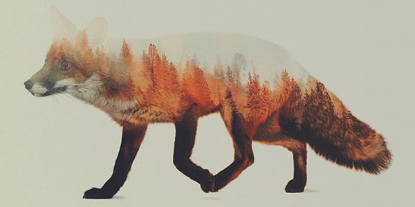 double-exposure-fox