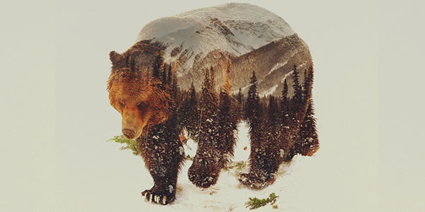 double-exposure-grizzly-2