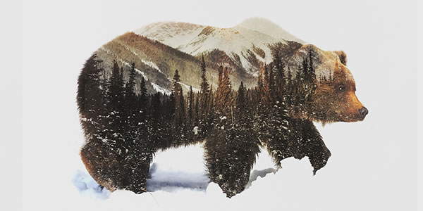 double-exposure-grizzly-bear