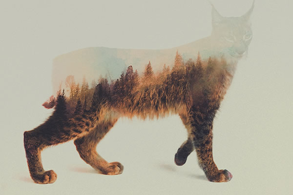 double-exposure-lynx-2