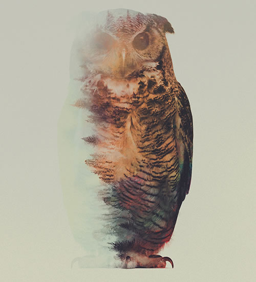 double-exposure-owl