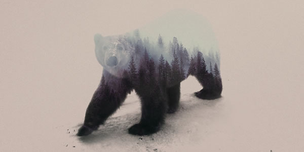 double-exposure-polar-bear-2