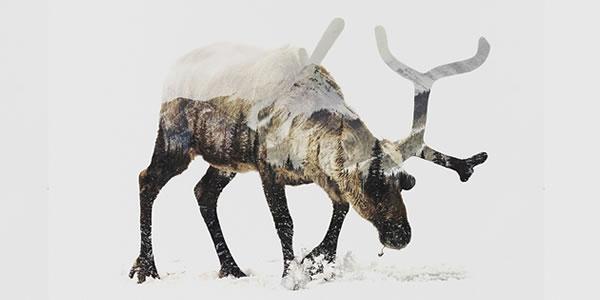 double-exposure-reindeer