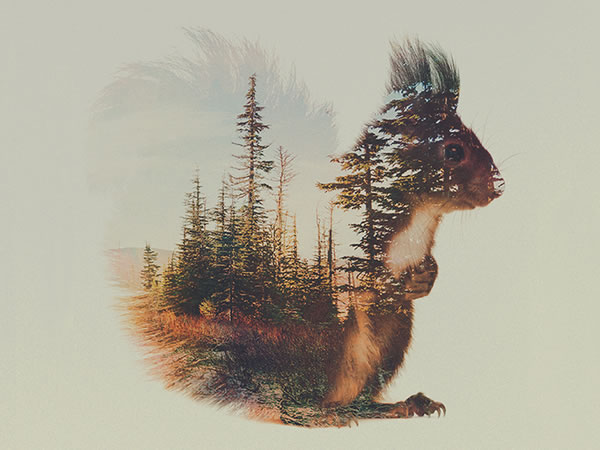 double-exposure-squirrel