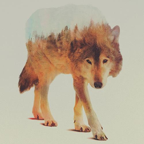 double-exposure-wolf-3